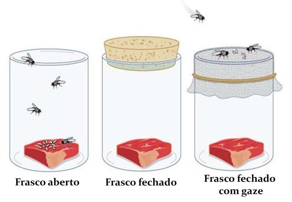 Biogênese - Experimento de Redi