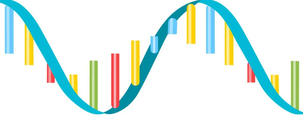 Ácidos nucleicos - RNA fita simples