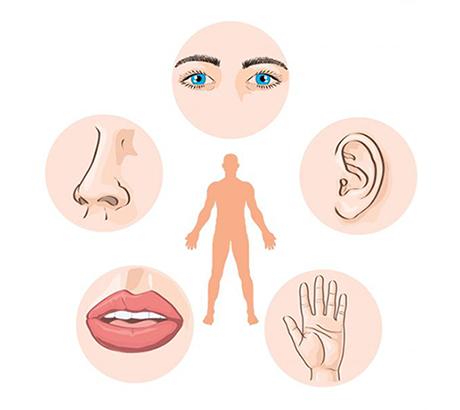 Sistemas do corpo humano: sistema sensorial