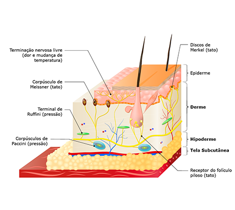 Sistemas do corpo humano: sistema tegumentar