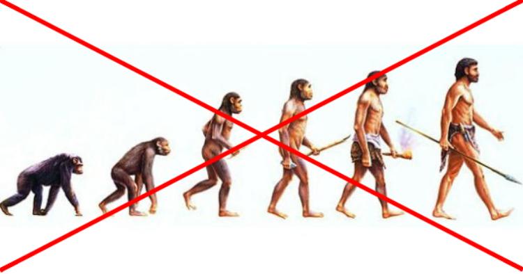 Darwinismo - imagem equivocada muito utilizada para explicar a evolução humana.