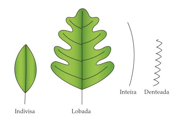 Classificação de folhas - Tipos de margem (Imagem retirada do livro Sistemática Vegetal 3 ed Um Enfoque Filogenético)