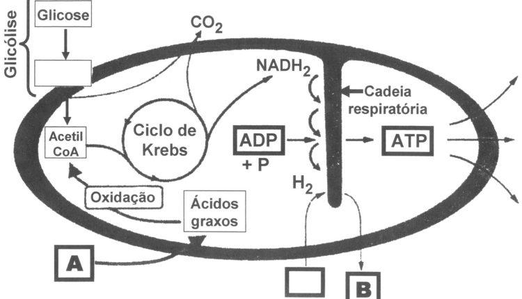 Glicólise - Ciclo de Krebs