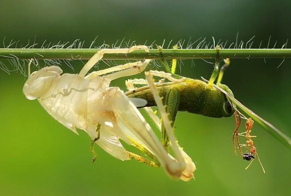 Artrópodes - Exoesqueleto de quitina