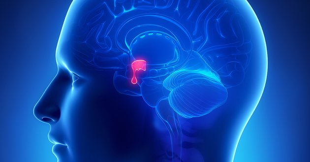Sistema endócrino - hipófise