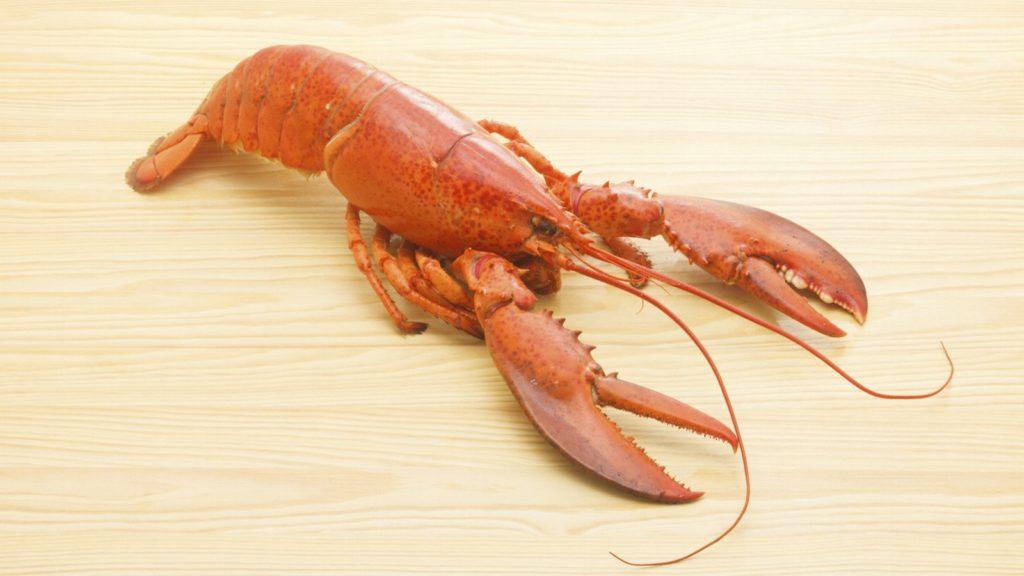 Artrópodes - lagosta