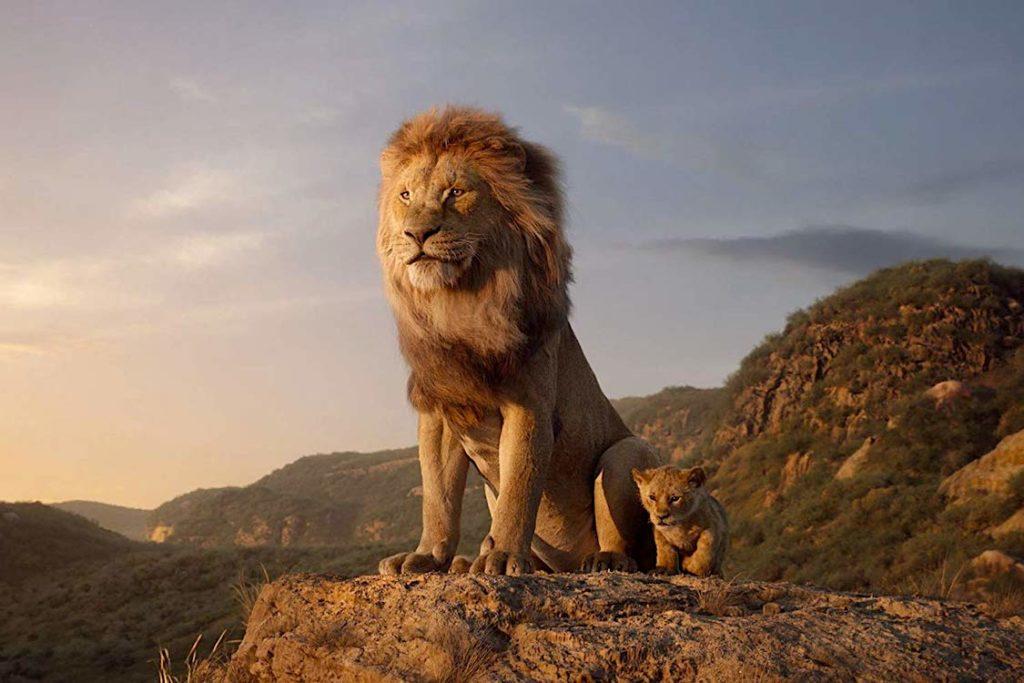 Felinos - Leão