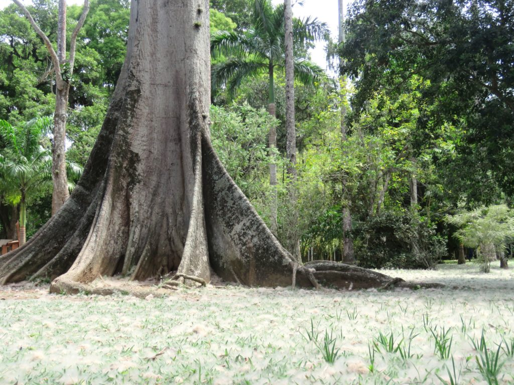 Tipos de raízes - Tabular