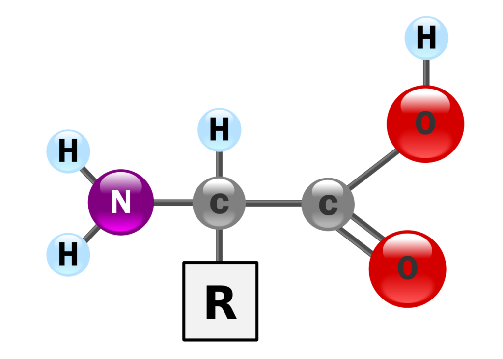 Aminoácidos - Estrutura molecular