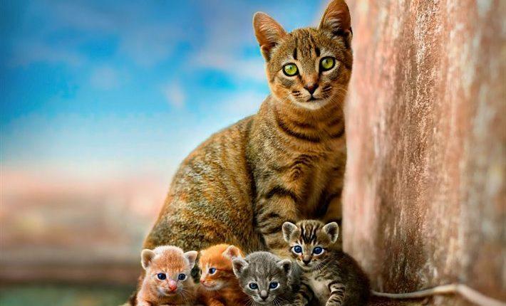 Gato, gata de estimação