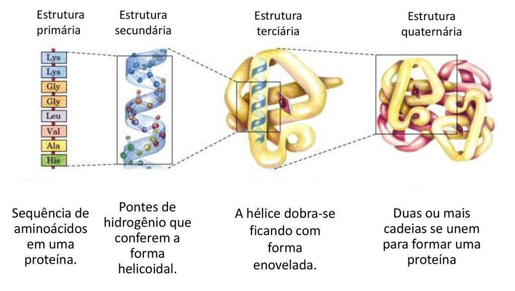 Proteínas - Fórmulas estruturais