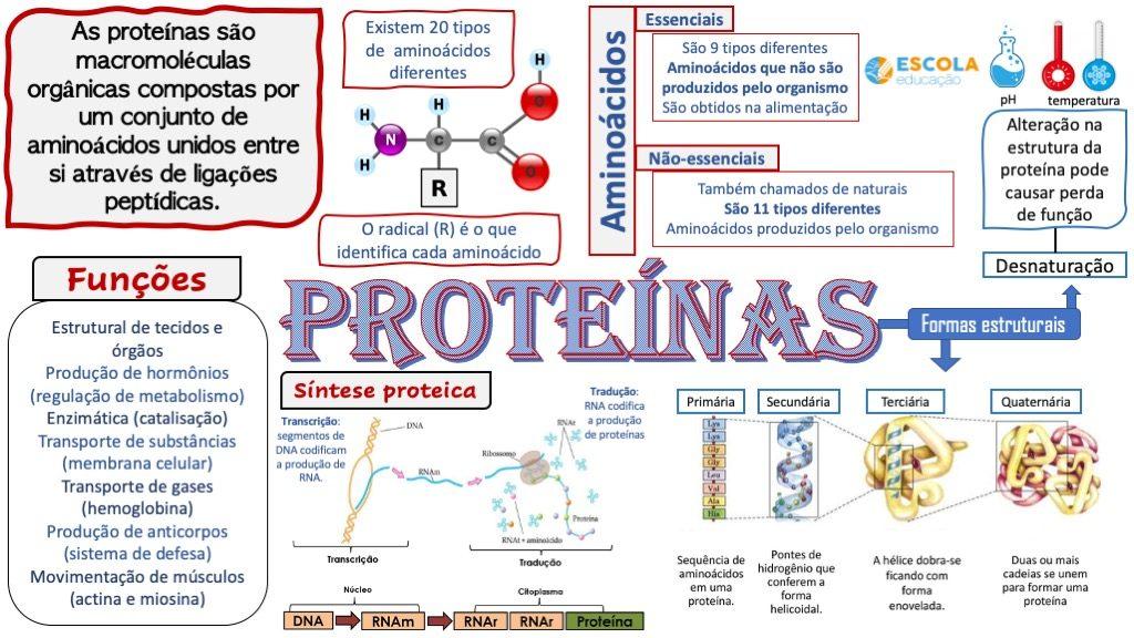 Mapa mental - Proteínas