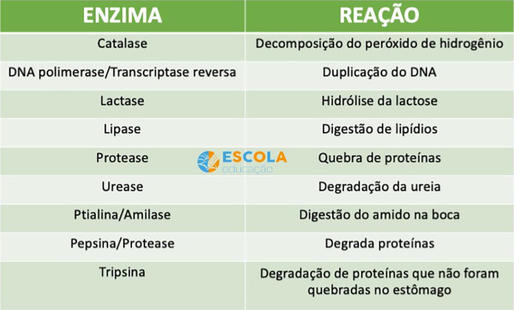 Tabela de enzimas