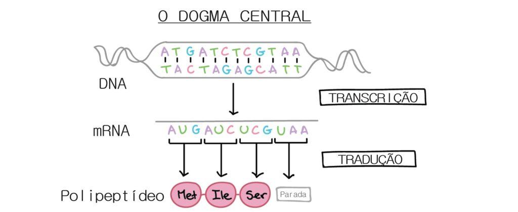 Biologia molecular - Dogma central