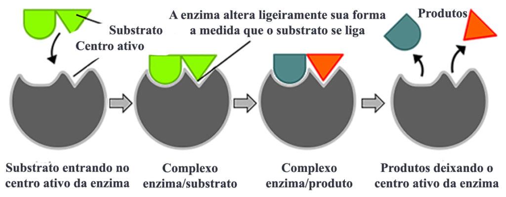 Enzimas - Encaixe entre enzima e substrato