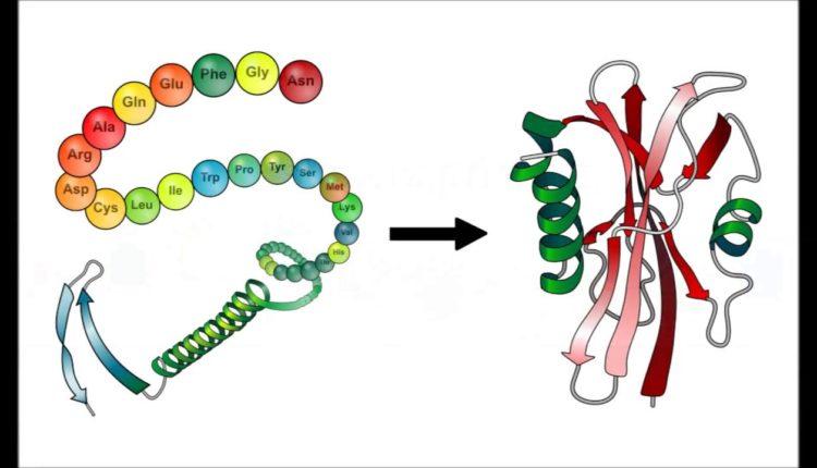 União de peptídeos para formar proteínas