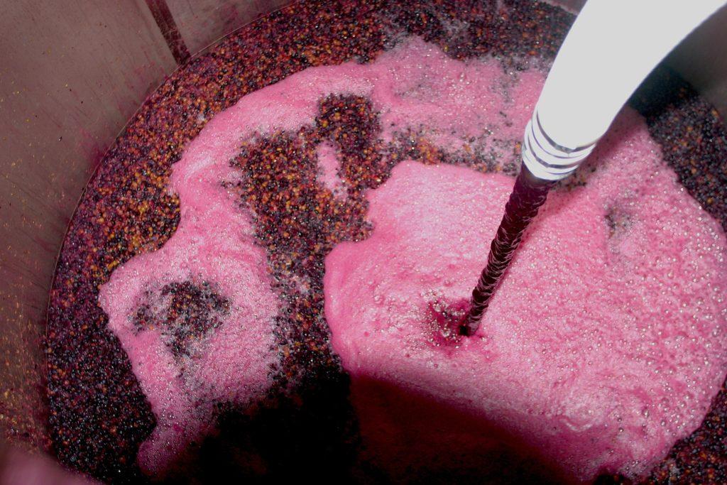 Metabolismo energético - Fermentação alcoólica para produção de vinho