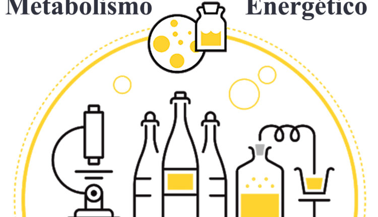Metabolismo energético - Fermentação