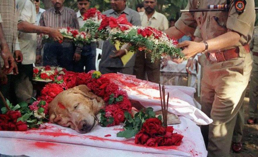 O enterro do cão herói