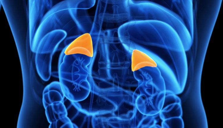 Glândulas suprarrenais