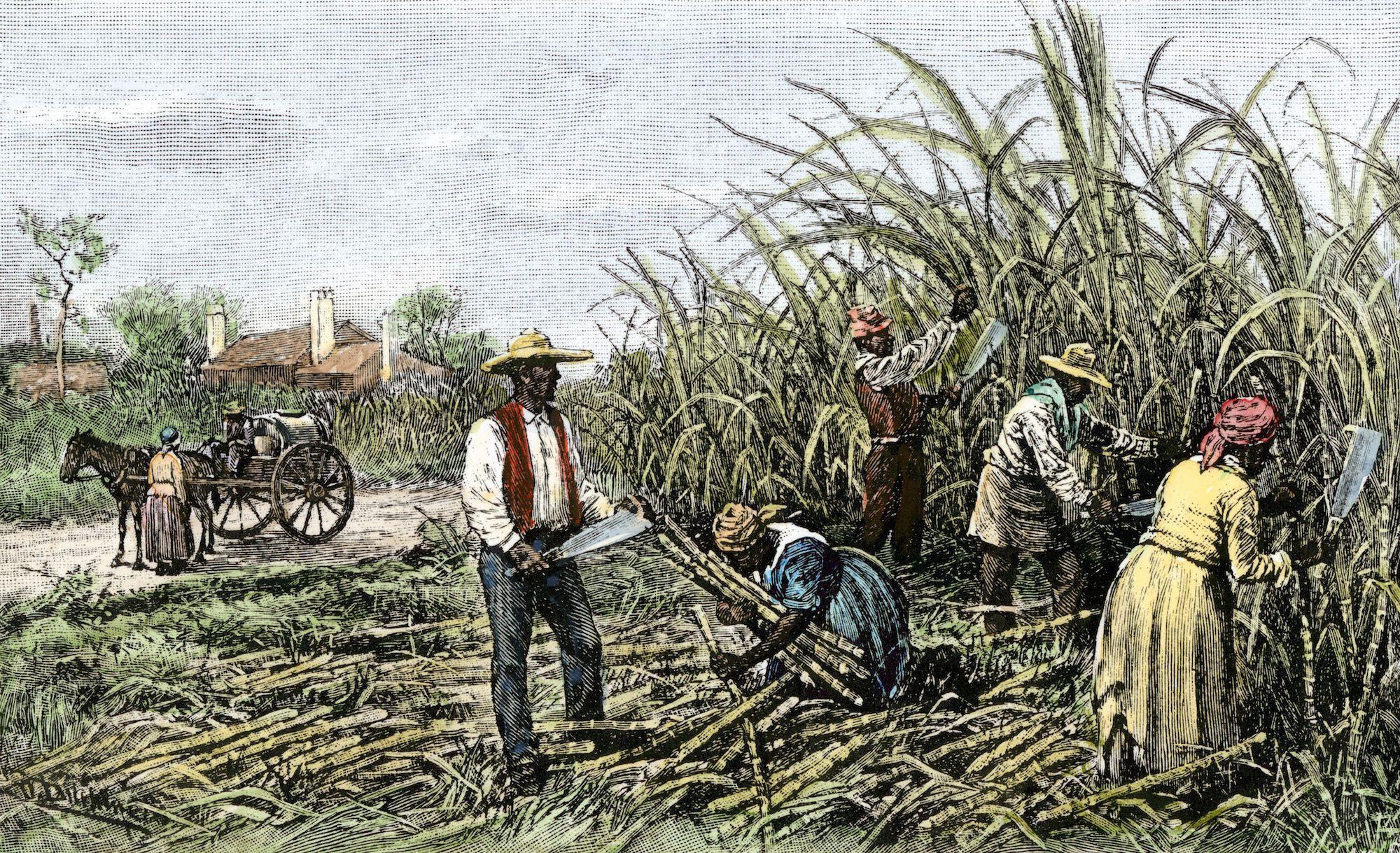 Plantation - O que é, sistema de plantation, plantation no ...