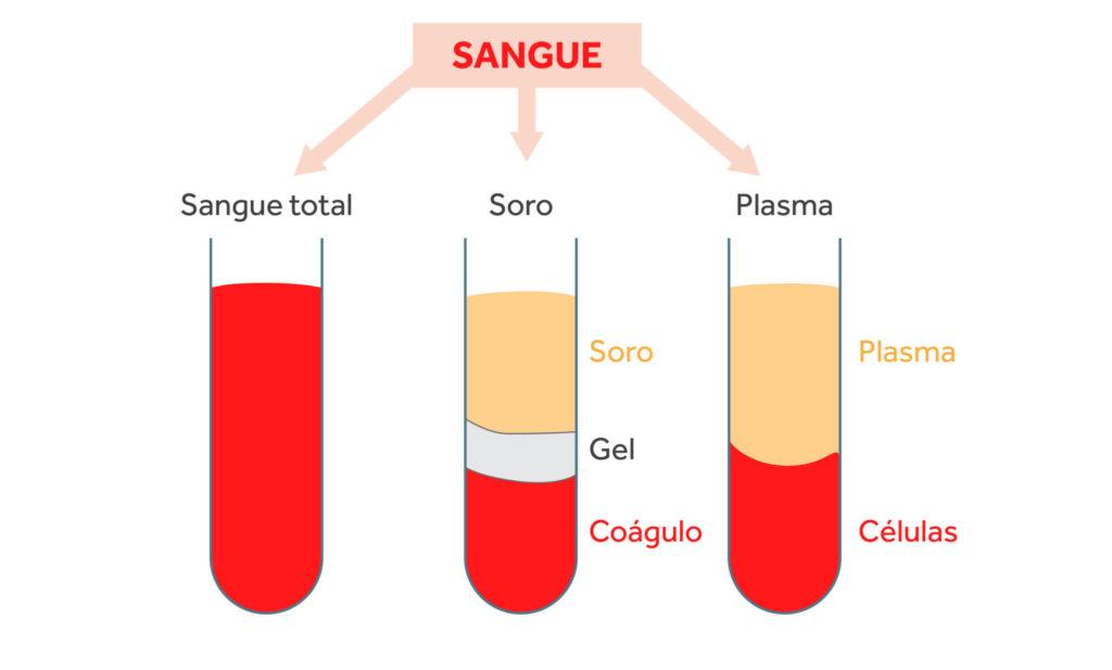 Plasma sanguíneo - Composição do sangue