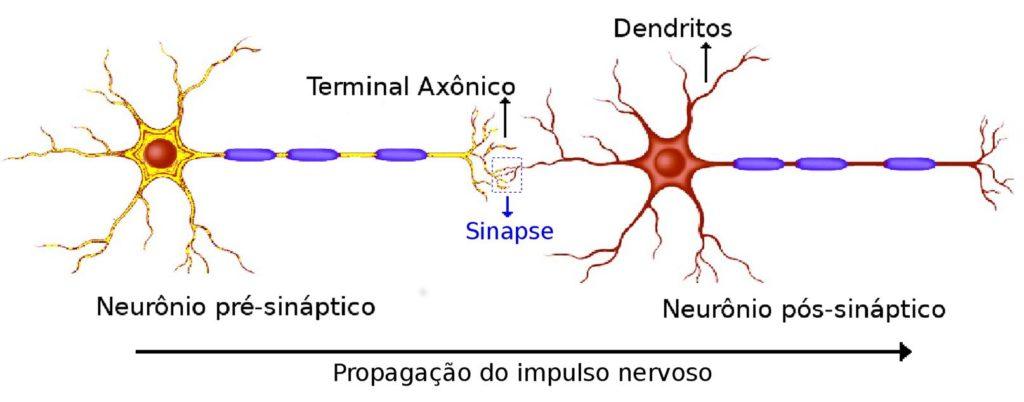 Sinapse - Comunicação entre neurônios