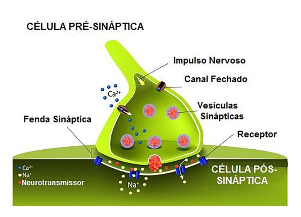 Sinapses - Diagrama de representação