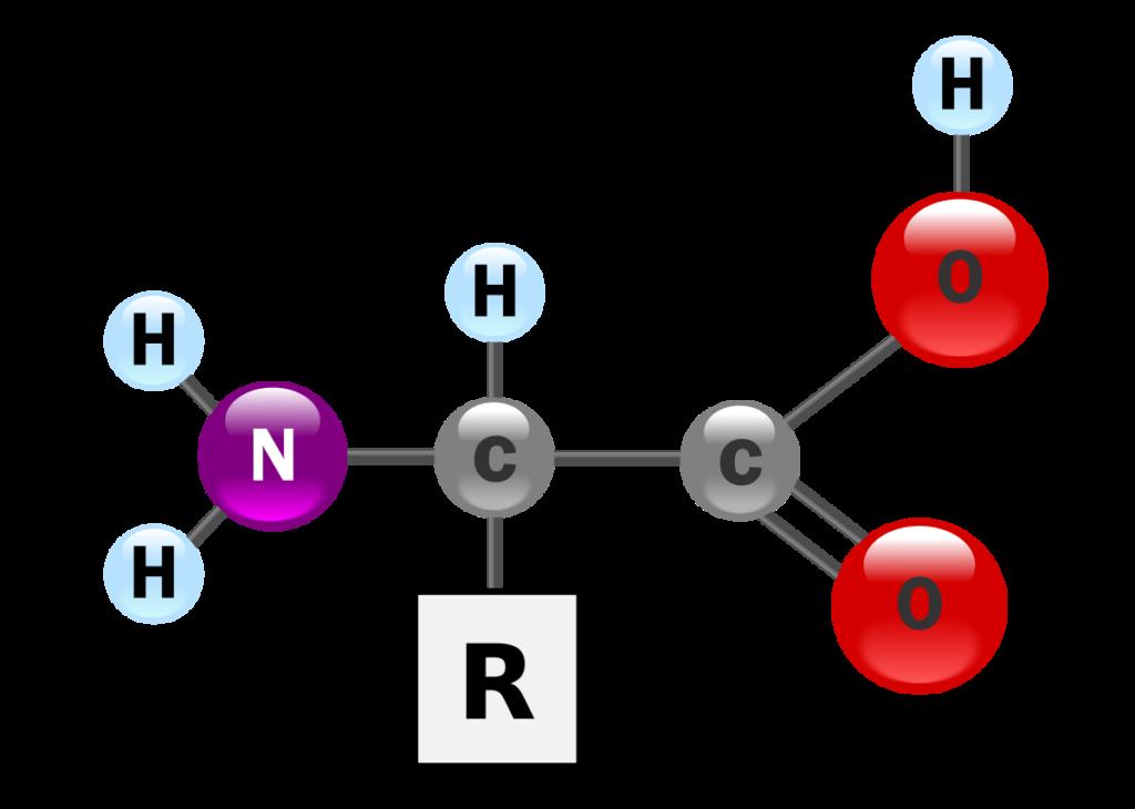 Proteínas - Fórmula estrutural do aminoácido