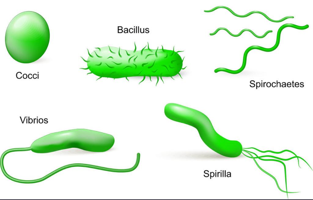 Classificação de procariontes - Bactérias