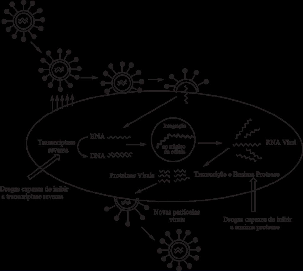 Transcriptase reversa - Mecanismo de ação