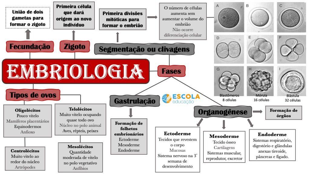 Mapa mental - Embriologia EE