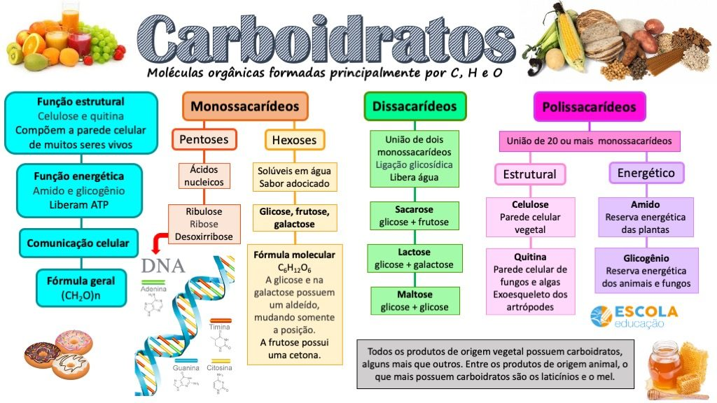 Mapa mental - Carboidratos
