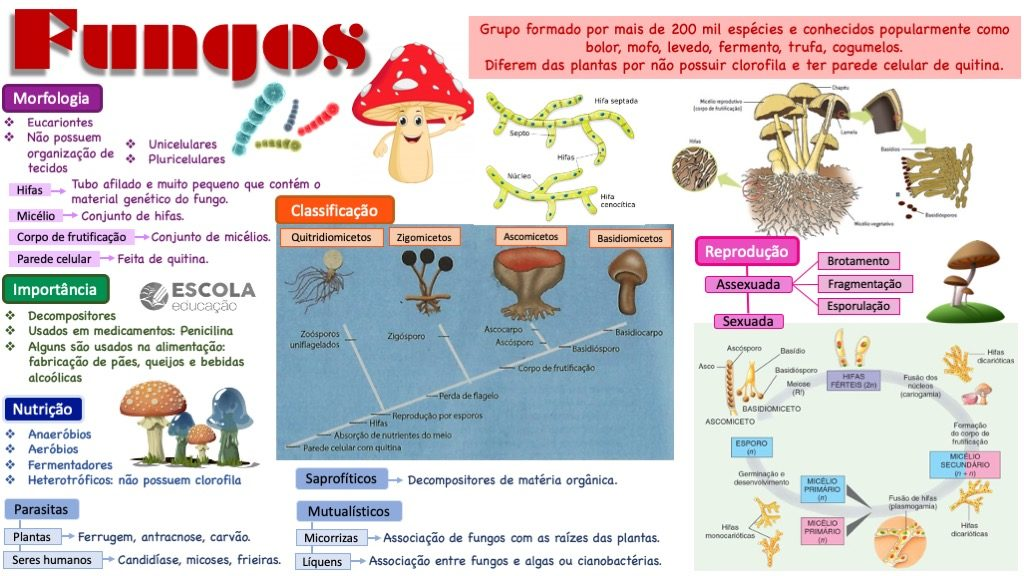 Mapa mental - Fungos