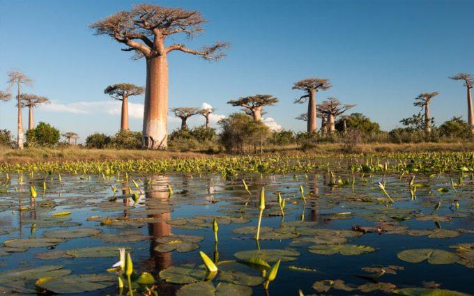 País com M - Madagascar