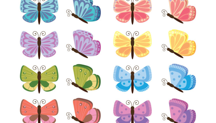 35 imagens de borboleta para colorir