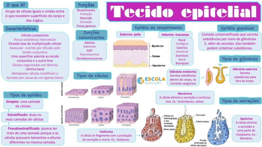 Mapa mental - Tecido epitelial