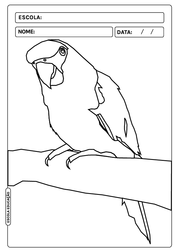 Animais para colorir