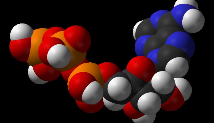 Exercícios ATP - Metabolismo energético