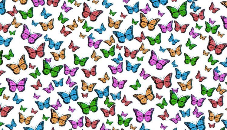 Confira 62 desenhos de animais para colorir e se divertir na pintura!