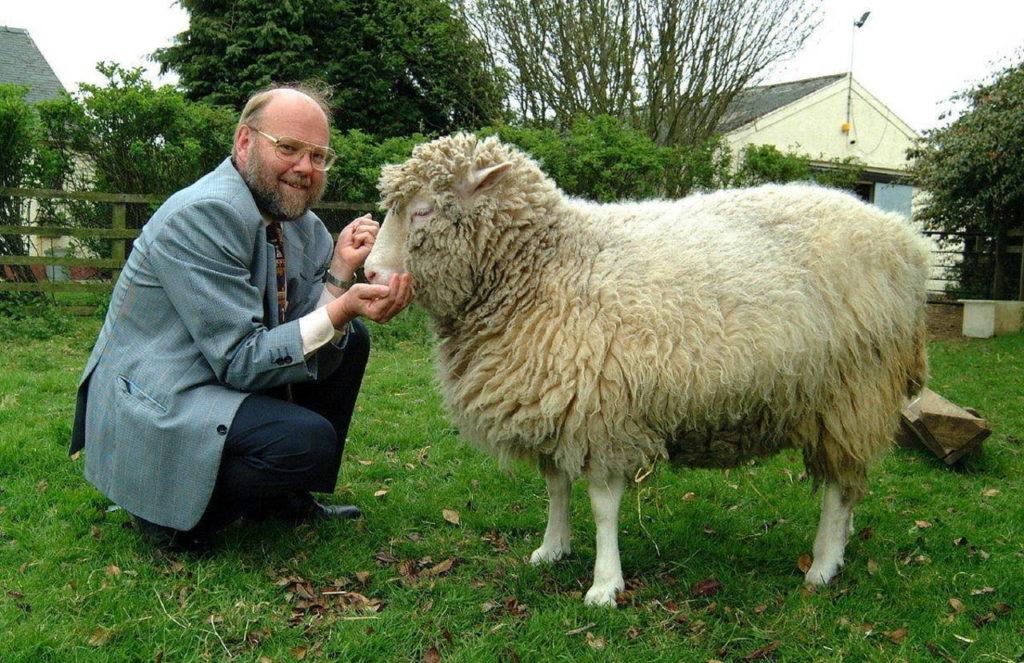 Clonagem - Dolly e Ian Wilmut, o chefe do grupo que realizou a clonagem dela.