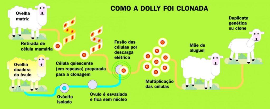 Clonagem - Processo de criação da ovelha Dolly