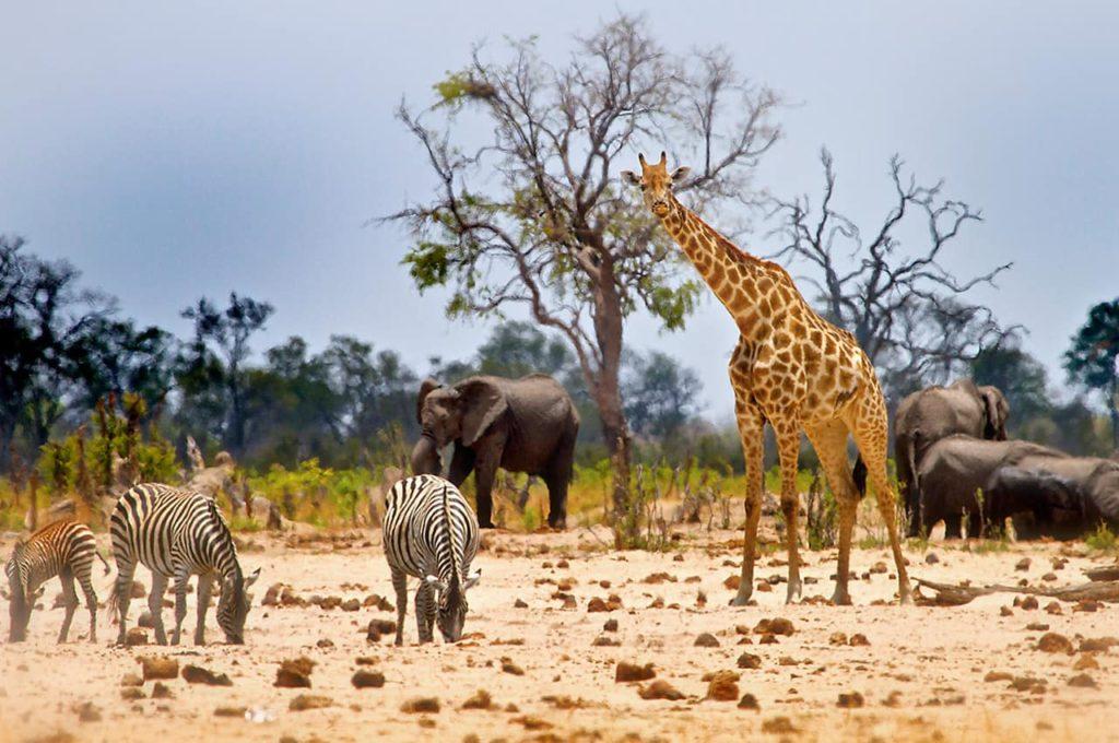País com Z - Zimbábue
