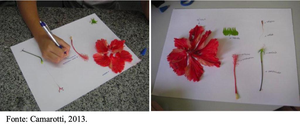 Plano de aula prática - Órgãos reprodutores das flores - Dissecação de flor
