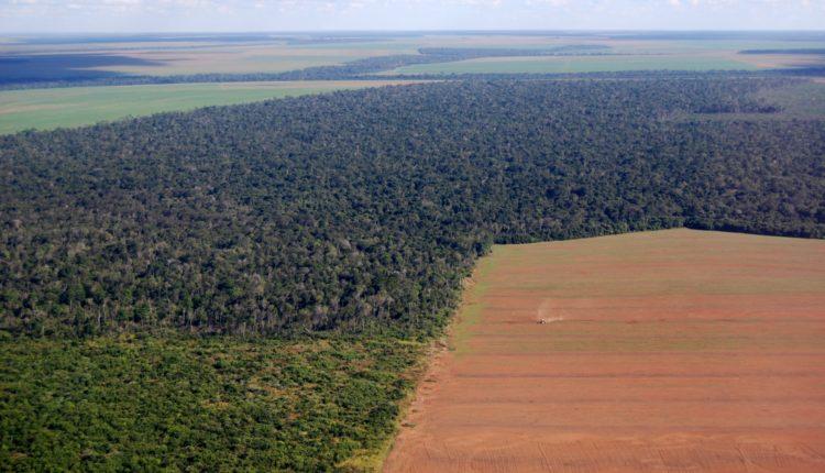Impactos ambientais causados pela agricultura.