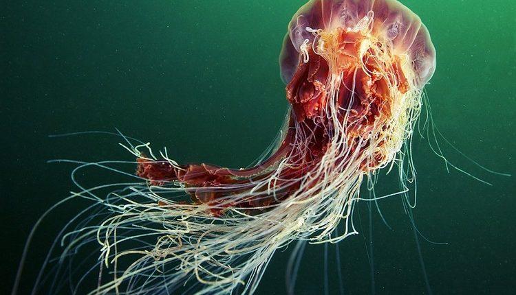 Os 12 maiores animais marinhos - Os gigantes dos mares