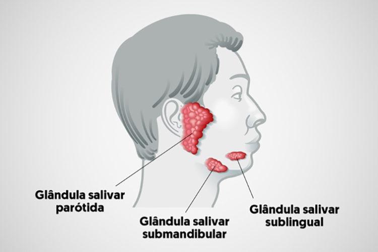 Anatomia das glândulas salivares