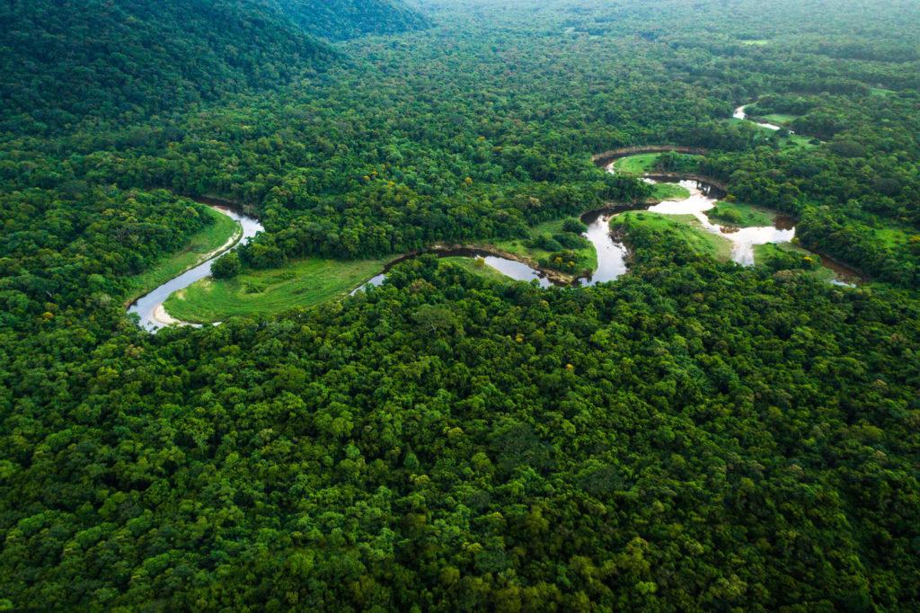 Ecossistemas Brasileiros - Floresta Amazônica