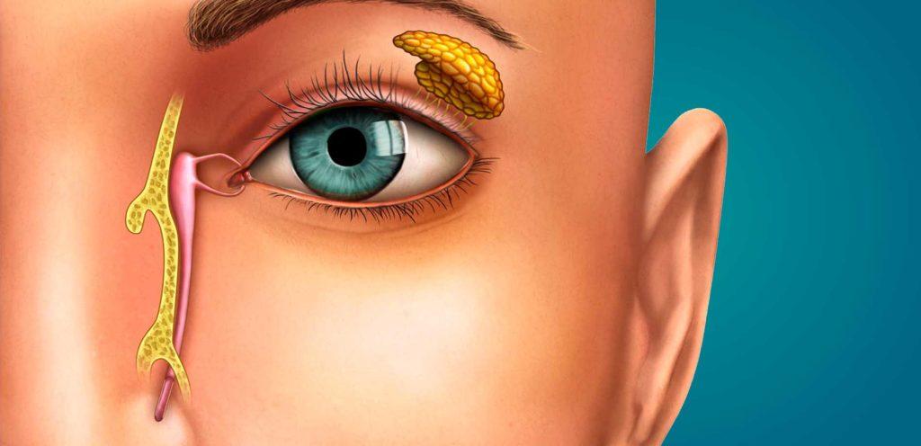 Glândula exócrina - Lacrimal