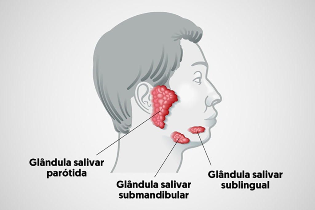 Glândula exócrina - Salivares